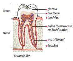 zenuwpijn tand symptomen